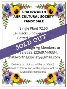 Pansy Sale - Sold Out